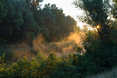 Misty, sunny morning in deciduous forest. Royalty Free Stock Photos