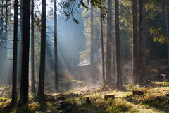 Misty sunny morning in forest. Stock Photo