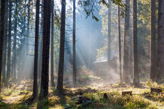 Misty  sunny morning in forest. Stock Photography