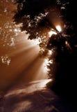 Misty Sunrays till och med träd runt om en krökning i vägen Royaltyfri Fotografi