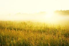 Misty sunrise Stock Image