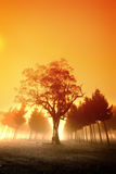 Misty Sunrise royalty free stock images