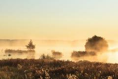 Misty sunrise Royalty Free Stock Image