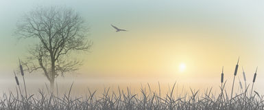 Misty Sunrise. Landscape with Reeds Royalty Free Stock Photography