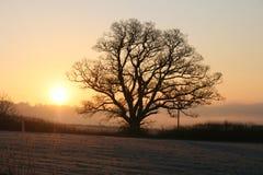 Misty Sunrise. A Cold Misty Morning Sunrise Royalty Free Stock Image