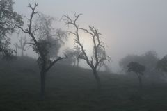 Misty sunrise in the apple orchard stock photo
