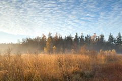 Misty sunrise in autumn forest Stock Image