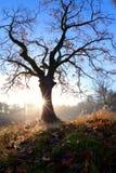 Misty sunrise behind oak tree in autumn Stock Photo