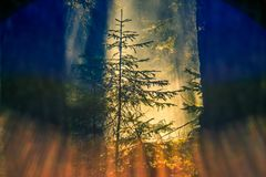 Misty sunrise in forest closeup. Landscape of misty dawn in forest closeup royalty free stock images