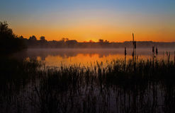 Misty Sunrise glow reflected in a still lake, silhouetting Bulrushes Stock Photography