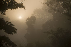 Misty sunrise in jungle forest in Nepal Royalty Free Stock Photos