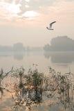 Misty sunrise at the lake Royalty Free Stock Images