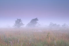 Misty sunrise on marsh Stock Photos