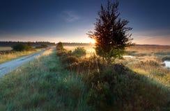 Misty sunrise on marsh in summer Stock Photos