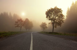 Misty sunrise on mountain autumn forest road Stock Photos