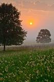 Misty Sunrise op Weide Stock Afbeelding