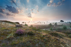 Misty sunrise over dunes with flowering heather Stock Photo