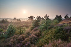 Misty sunrise over dunes with flowering heather Stock Images