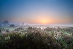 Misty sunrise over heather meadows Royalty Free Stock Images