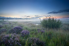 Misty sunrise over heathland Royalty Free Stock Photo