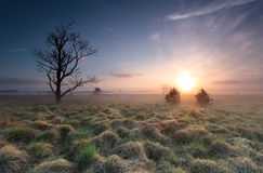 Misty sunrise over marsh with old tree Royalty Free Stock Photo