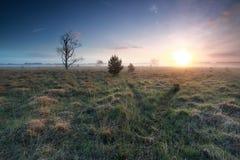 Misty sunrise over marsh in spring Royalty Free Stock Photo
