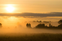 Misty sunrise over meadow Royalty Free Stock Photo