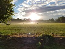 Misty Sunrise over Stanmer-Park Stock Afbeelding