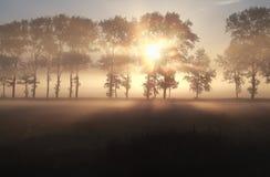 Misty sunrise over summer meadow Royalty Free Stock Photos