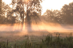 Misty sunrise over summer meadow Royalty Free Stock Images