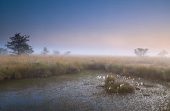 Misty sunrise over swamp Stock Photography