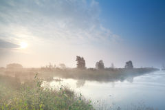 Misty sunrise over swamp in summer Royalty Free Stock Image