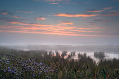 Misty sunrise over wet swamp Stock Photos