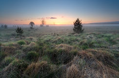 Misty sunrise over wild meadow Royalty Free Stock Photography