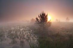 Misty sunrise over wild swamp Stock Image