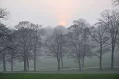 Misty sunrise in park. Misty autumn morning in a natural reserve park. Taken in Roundhay Park, Leeds, UK Royalty Free Stock Images