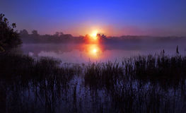Misty Sunrise reflected in a still lake, silhouetting Bulrushes Stock Photo