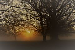 Misty sunrise in rural West Sussex, England. Stock Image
