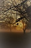 Misty sunrise in rural West Sussex, England. Stock Photography