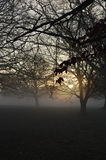 Misty sunrise in rural West Sussex, England. Royalty Free Stock Photography