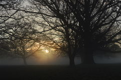 Misty sunrise in rural West Sussex, England. Royalty Free Stock Image