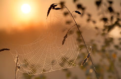 Misty sunrise and spiderweb Royalty Free Stock Photo