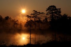 Misty sunrise in Viru Bog Royalty Free Stock Photography