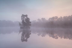 Misty sunrise on wild lake Royalty Free Stock Photo