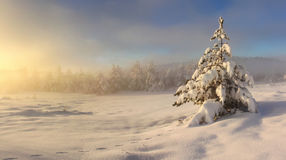 Misty sunrise in winter Royalty Free Stock Photo