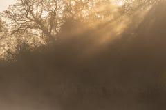 Misty sunshine at Southampton Common royalty free stock images
