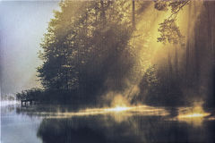 Misty suny morning in forest Royalty Free Stock Photo