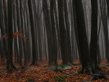Misty thick and dark forest Royalty Free Stock Photo