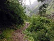 Misty Trail del circuito del senderismo de Annapurna durante monzón Foto de archivo libre de regalías