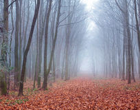 Misty trail in forest Stock Photo